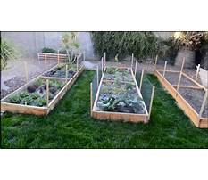 Building a raised garden bed in arizona Video
