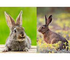 Bunny and rabbits difference Video