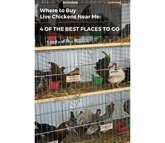 Buy chicken near me Video