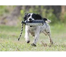Can dogs go on trains.aspx Video