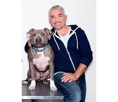 Cesar dog trainer Video