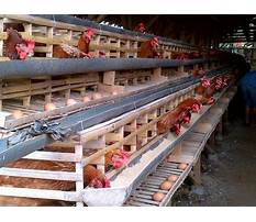 Chicken cages houses in philippines Video