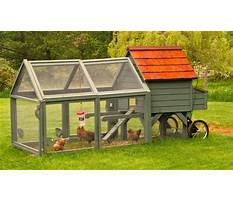 Chicken coop too small Video