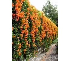 Climber plants example Video
