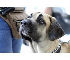 Cloverdale dog training.aspx Video