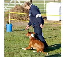 Countywide dog training santa rosa ca.aspx Video