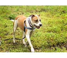 Crate trained dogs for adoption.aspx Video