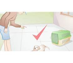 Crate training a dog that hates crates.aspx Video