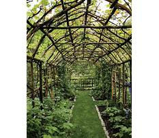 Creative grape arbors pergola Video