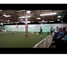 Dayton dog training club.aspx Video