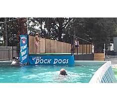 Dock dogs training virginia beach.aspx Video