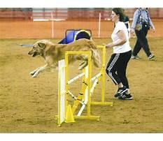 Dog agility training dfw Video