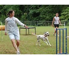 Dog agility training georgia.aspx Video