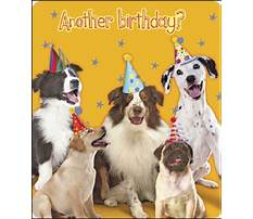 Dog barking happy birthday wav Video