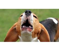 Dog barking help Video
