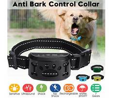 Dog barking training Video