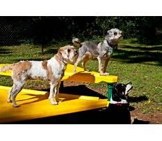 Dog board and train edmonton Video