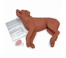 Dog cpr training Video