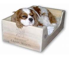 Dog crate training at night.aspx Video