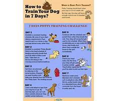 Dog day train Video
