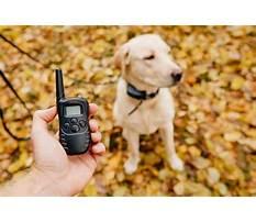 Dog e training Video