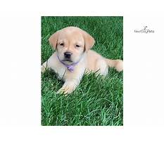 Dog house plans easy.aspx Video