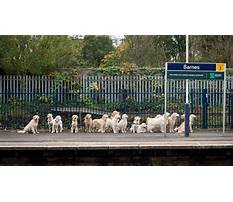 Dog in train station Video