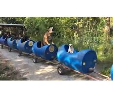 Dog in train Video