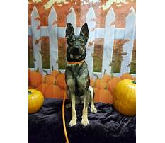 Dog obedience training classes cost.aspx Video