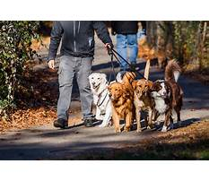 Dog obedience training dfw Video