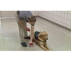 Dog obedience training dyersburg tn Video