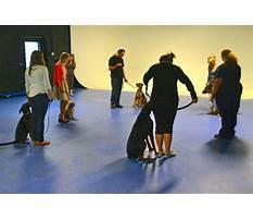 Dog obedience training schools.aspx Video