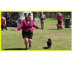 Dog obedience training seymour indiana.aspx Video