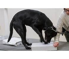 Dog scent training calgary.aspx Video