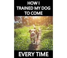 Dog train come when called Video