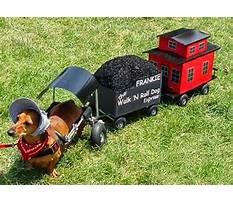 Dog train conductor Video