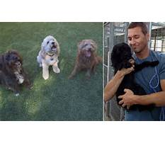 Dog train daily mail Video