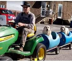 Dog train driver Video