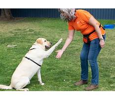 Dog train drop it Video