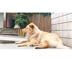 Dog train station every day Video