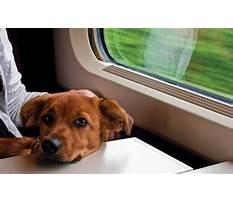 Dog traincom Video