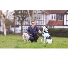 Dog training academy Video