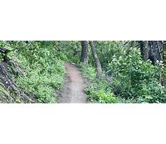 Dog training advice forum.aspx Video