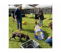 Dog training and behavior stockport.aspx Video