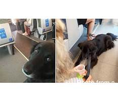Dog training away from home Video