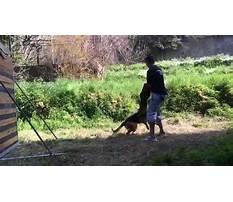 Dog training beirut lebanon.aspx Video