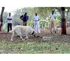 Dog training bhopal Video