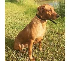 Dog training birds for sale mn.aspx Video