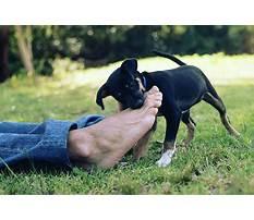 Dog training biting problems Video