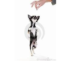 Dog training book pdf.aspx Video